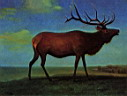 Oil painting reproduction of Elk