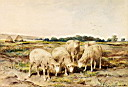 Oil painting reproduction of Grazing Sheep