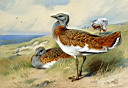 Oil painting reproduction of Great Bustards