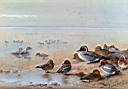 Oil painting reproduction of Pintail Teal And Wigeon On The Seashore