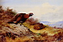 Oil painting reproduction of Red Grouse On The Moor